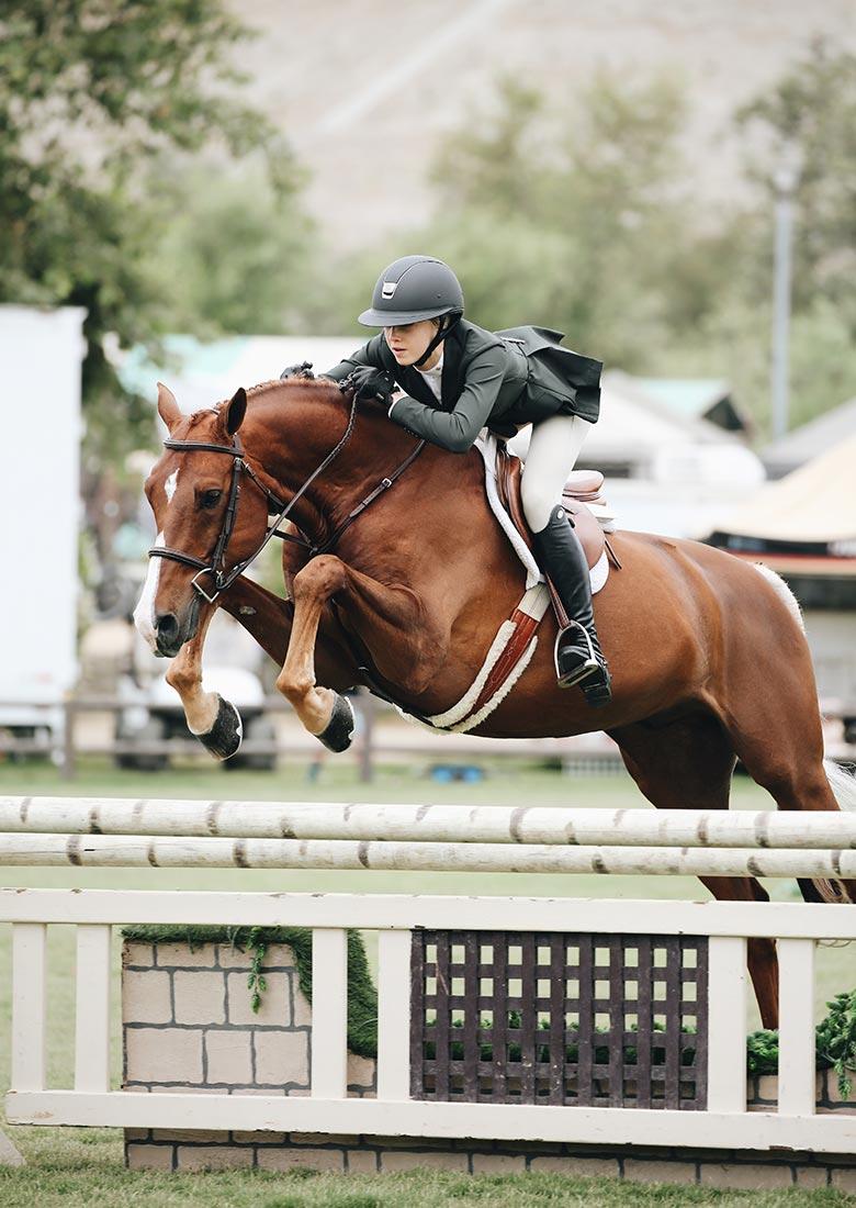Vi arbejder både med springheste, dressurheste og andre heste, ponyer m.m.